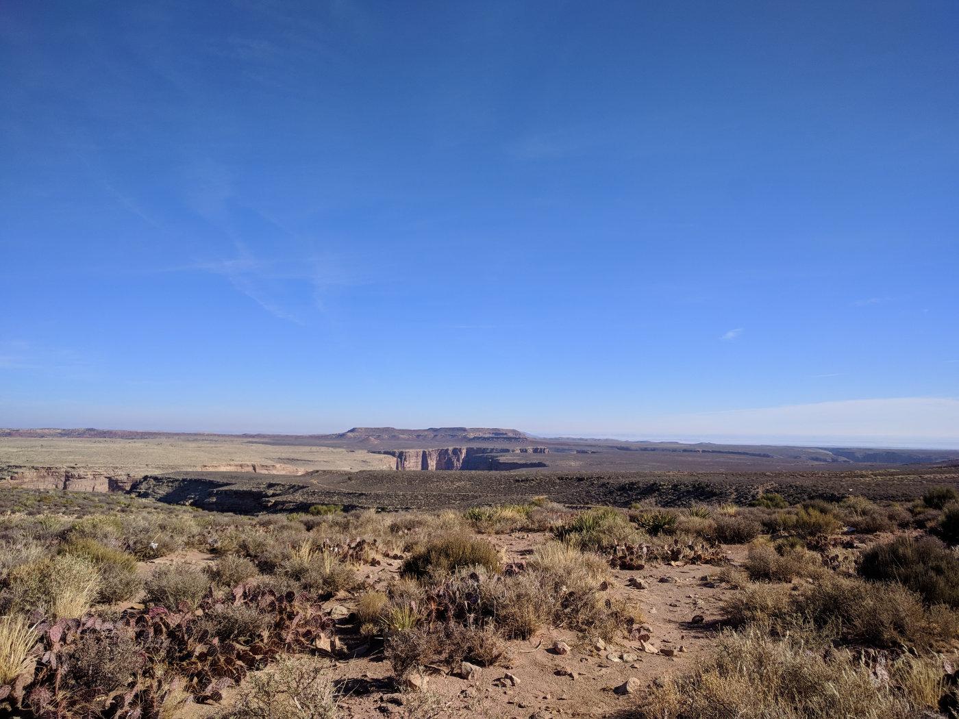 more more desert
