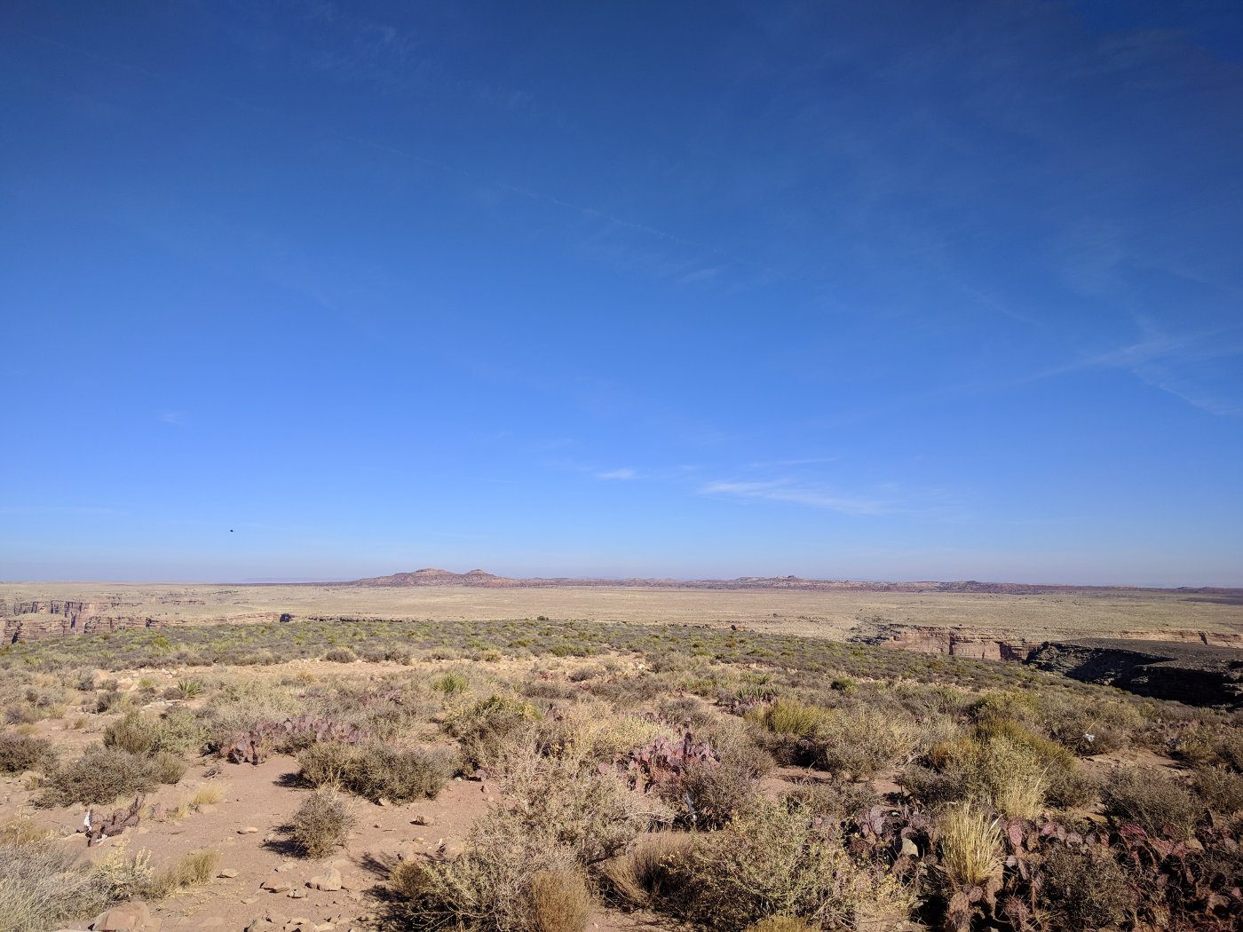 even more desert