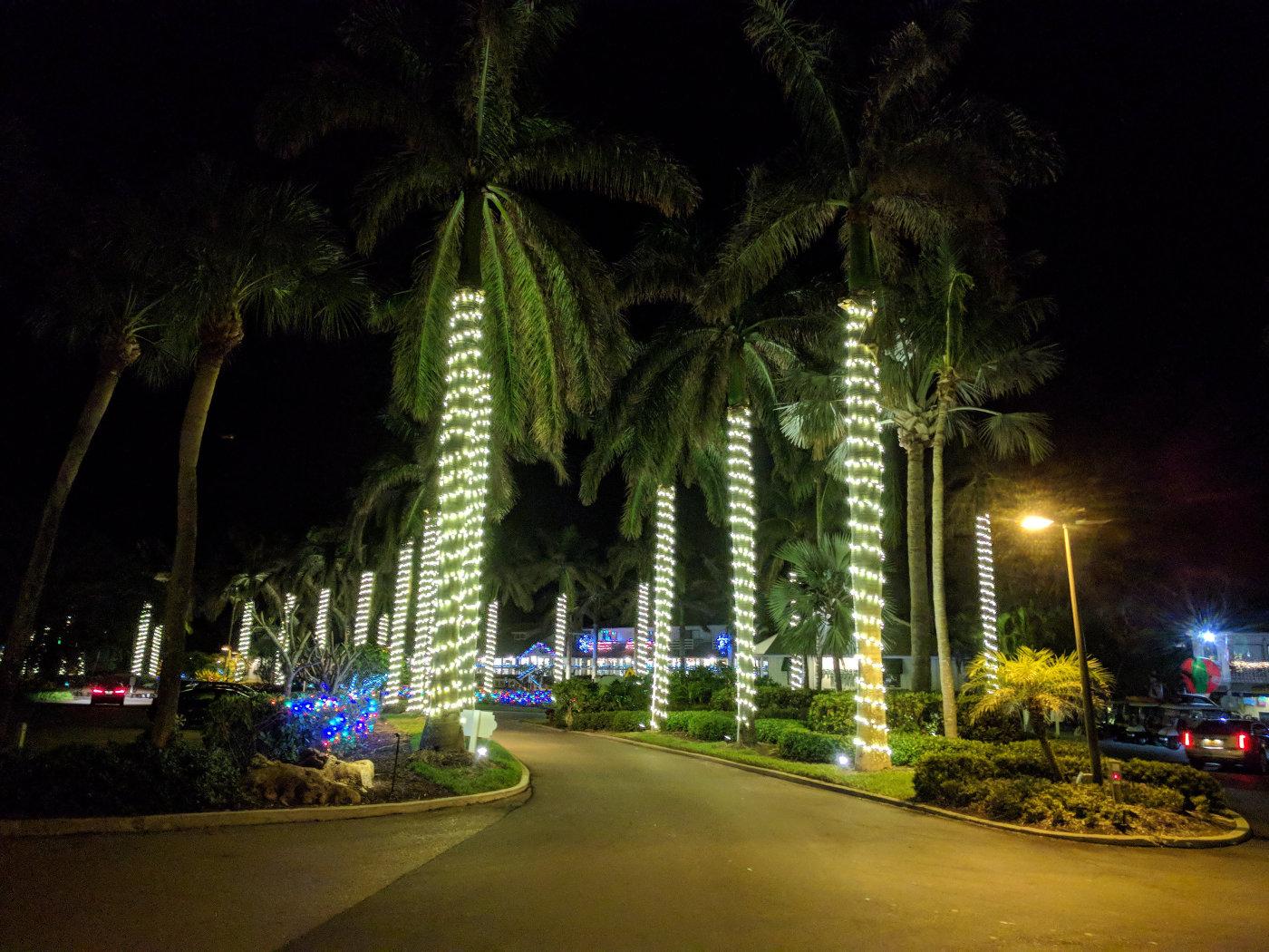 Xmas Palms